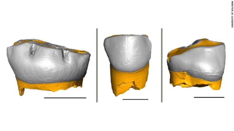 This is a 3D reconstruction of the three Neanderthal milk teeth analyzed in the study. Shown are (from left) the tooth found in the Fumane Cave; the one found in the Broion Cave; and the tooth found in the De Nadale Cave.