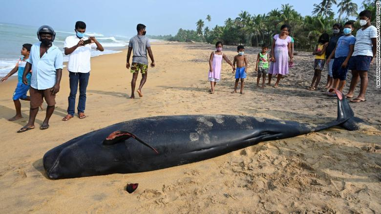 Sri Lanka rescues 100 beached whales after mass stranding