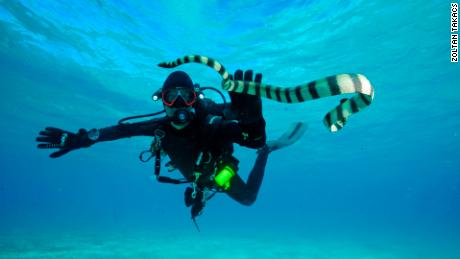 Biomedical scientist Zoltan Takacs with a sea snake in Fiji