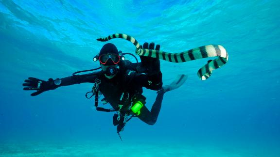 Biomedical scientist Zoltan Takacs has traveled to more than 190 countries in search of venomous creatures that can potentially help create new medical treatments -- like this sea snake in Fiji. Scroll through the gallery for more on the ways venomous animals are aiding in drug development.