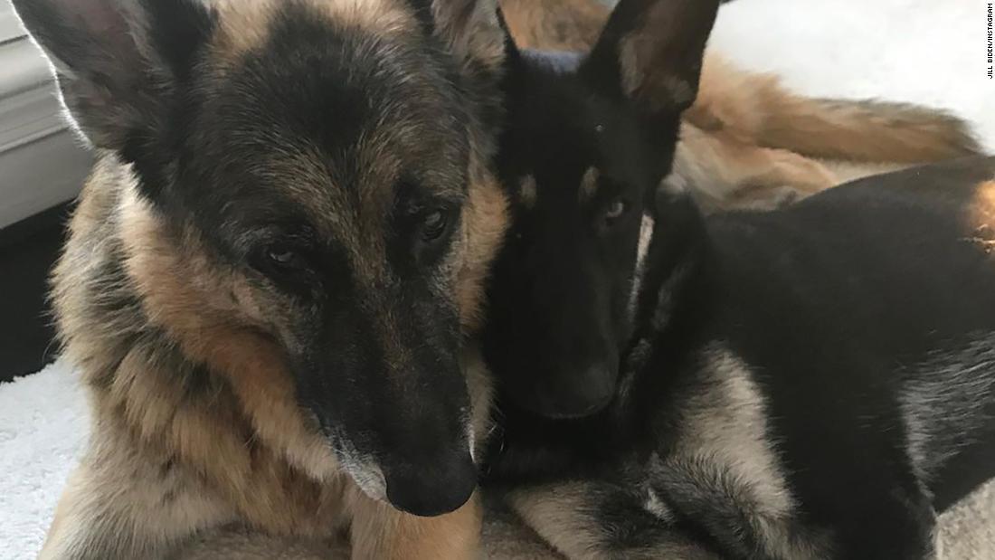Biden German Shepherd has aggressive incident and sent back to Delaware