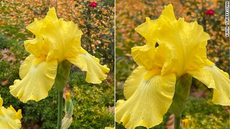Ces photos prises du même point de vue montrent que le Pro Max (à droite) a un zoom 2,5x plus serré.