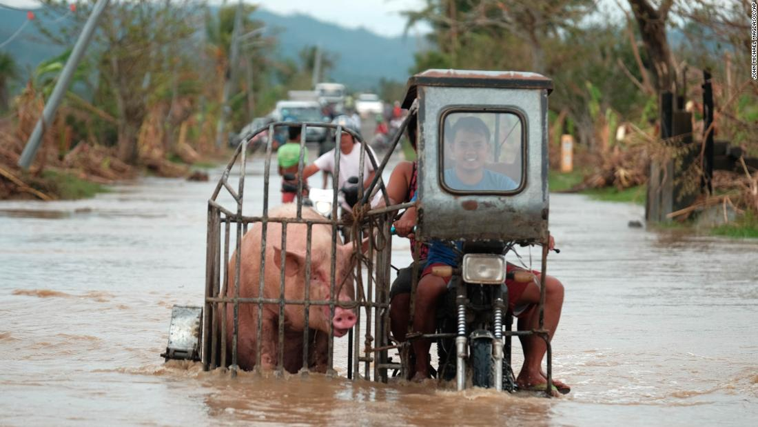 A motorcycle carrying a pig crosses a flooded road in the Albay province of the Philippines on November 12.