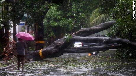 A man walks beside a toppled tree in Quezon City, Philippines.
