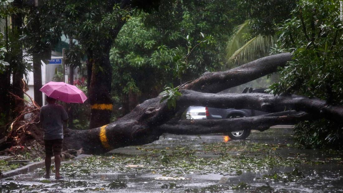 A person looks at a toppled tree in Quezon City, Philippines, on November 12.