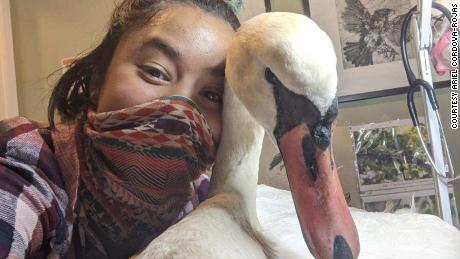 Ariel Cordova-Rojas rescued this swan in New York City and it wasn't an easy feat.