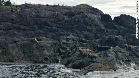 Northern sea lions on West Ballenas Island.