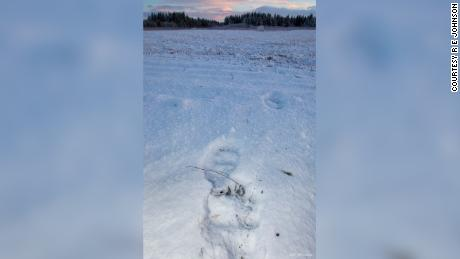 Animal tracks seen at Yakutat Airport on Sunday, one day after the accident.