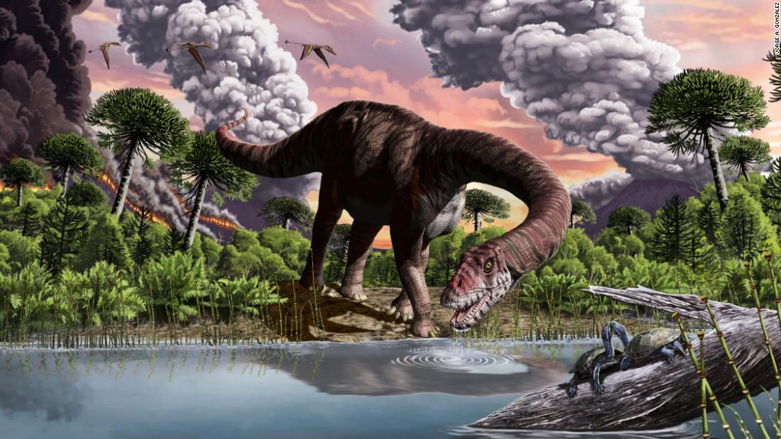 Why some dinosaurs had such long necks