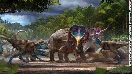 'Dueling dinosaurs' fossils show Triceratops, T. rex, may have died after a battle