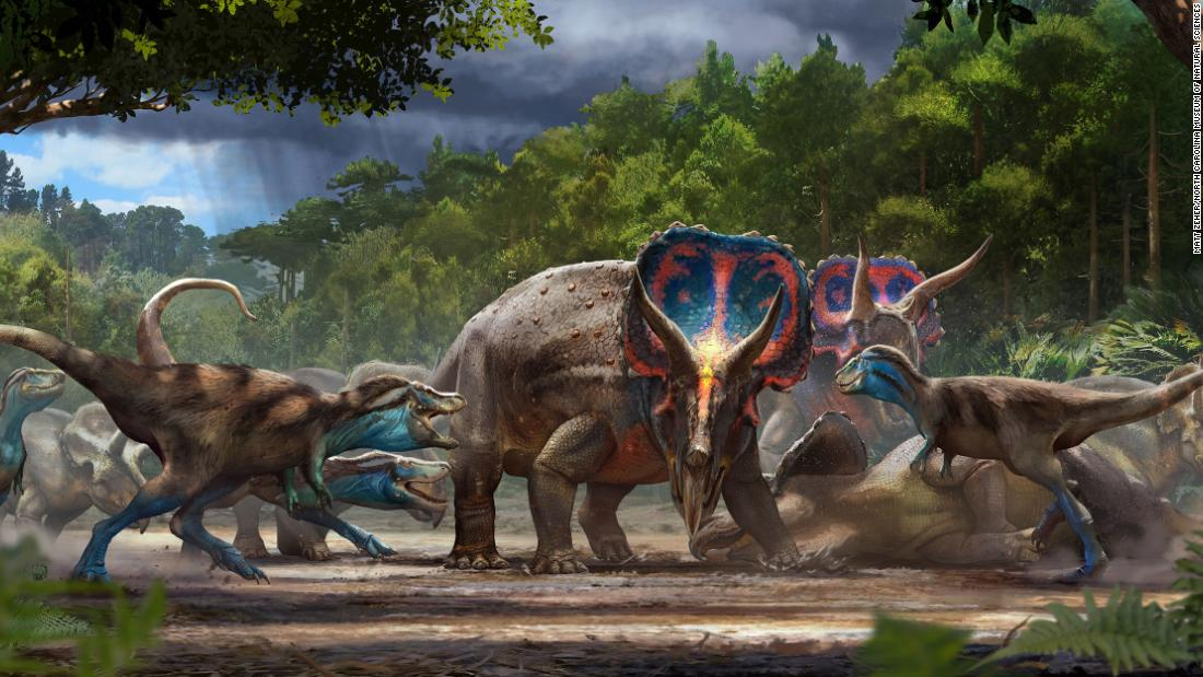 This artist's illustration shows Triceratops and juvenile tyrannosaurs facing off near the end of the Cretaceous Period 67 million years ago.