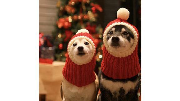 Christmas Pom-pom Dog Hat