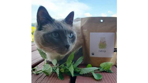 Organic Catnip Garden-in-a-Bag