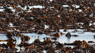 [Image: 201119144641-kelp-farm-ireland-c2e-4-med...us-169.jpg]