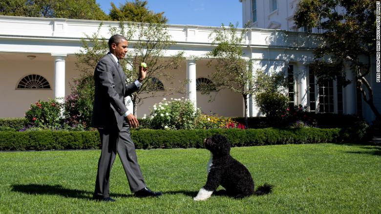 Il presidente Barack Obama e Bo alla Casa Bianca nel 2010.