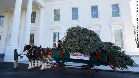 The White House Christmas Tree is seen in front of the White House in Washington, DC, on November 23, 2020.