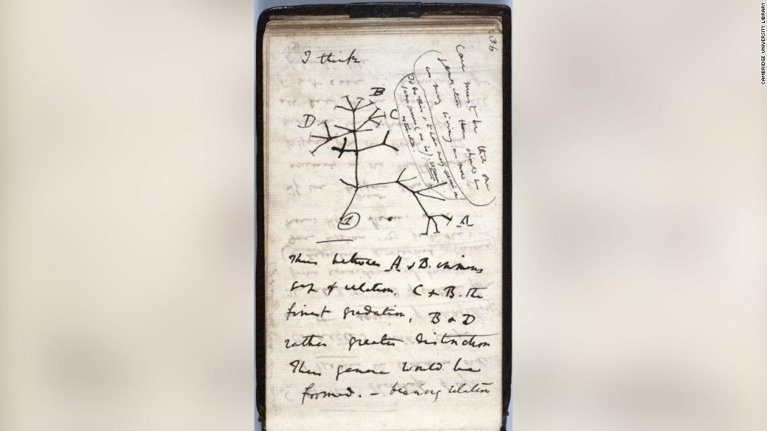 Mystery looms over a valuable set of Charles Darwin notebooks that went from 'lost' to 'likely stolen'