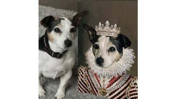 پرنسس - پرتره خانگی حیوان خانگی سفارشی