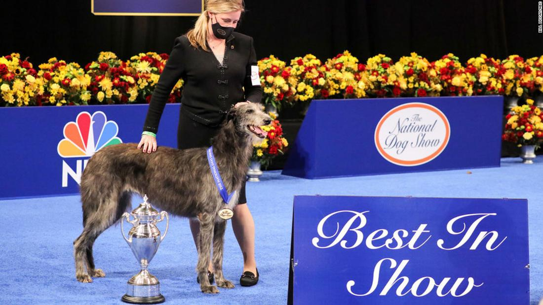 Claire the Scottish Deerhound wins top prize at the National Dog Show