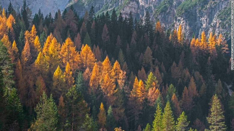 Trees are losing their leaves earlier because of climate change