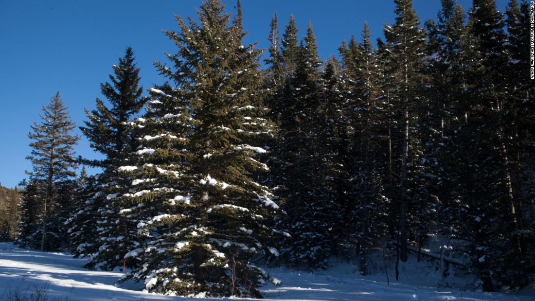 National forests will let you cut your own Christmas tree | CNN Travel