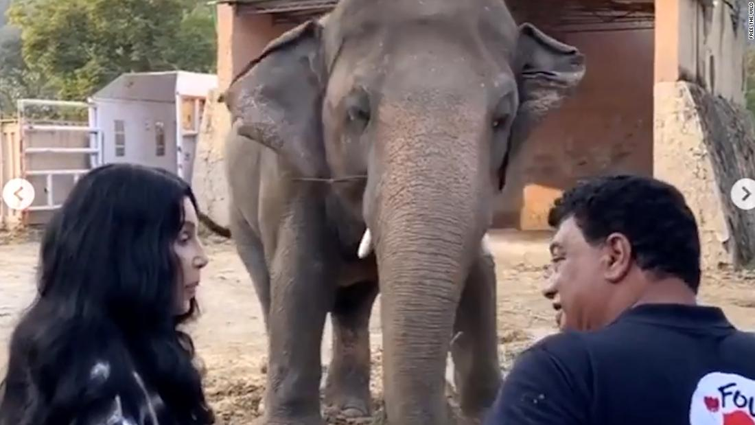 Cher sings to 'the world's loneliest elephant'