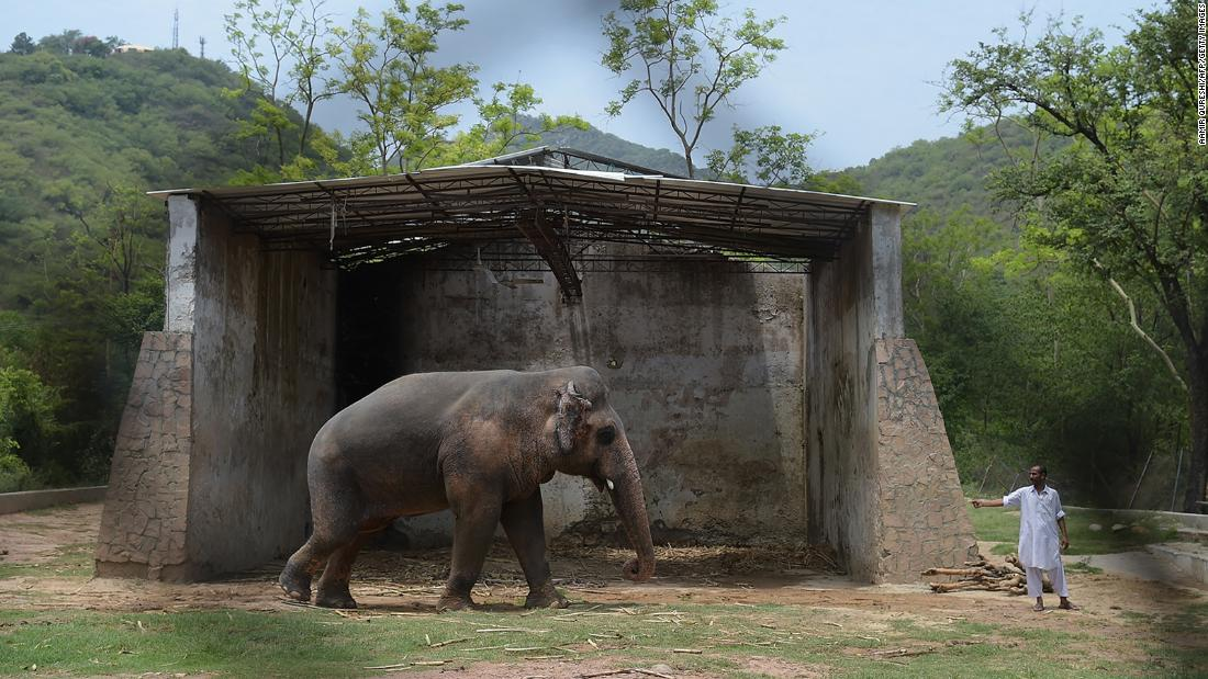 Singer Cher has helped rescue the 'world's loneliest elephant' after decades in captivity - CNN