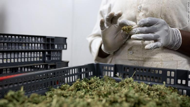 The UN removes cannabis from a list of the most dangerous substances