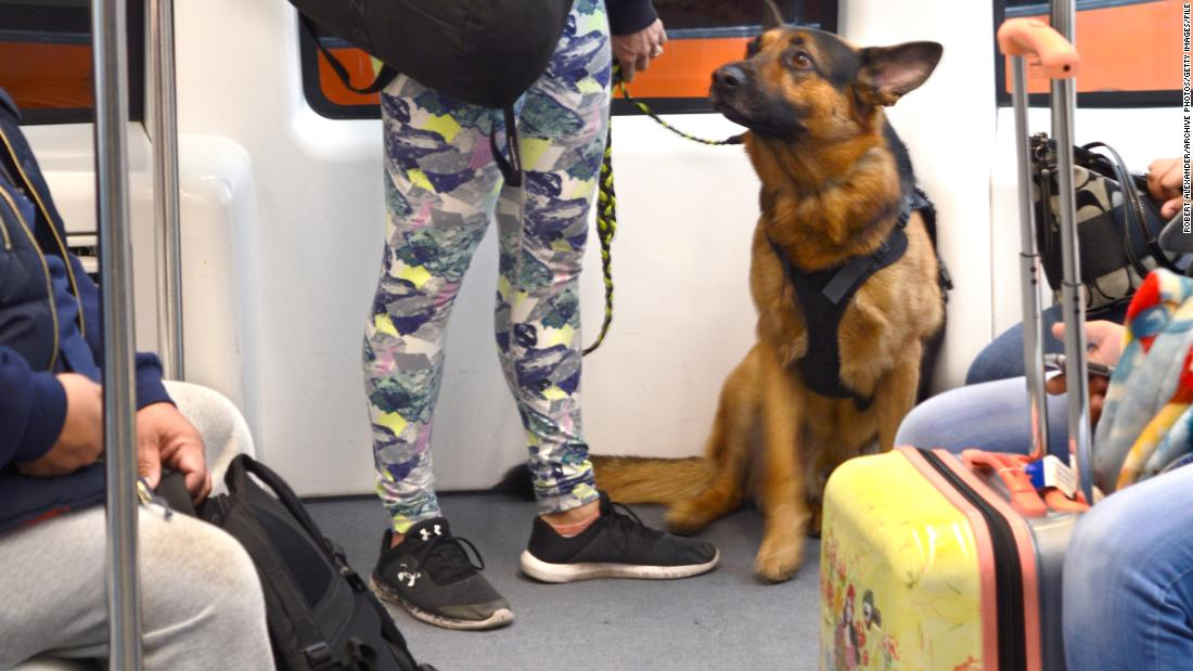 New rule cracks down on emotional support animals on planes
