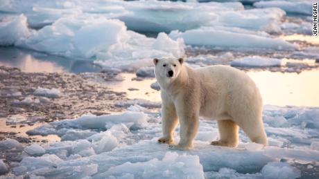 Emails from the edge: Svalbard's polar bears are sending messages to scientists