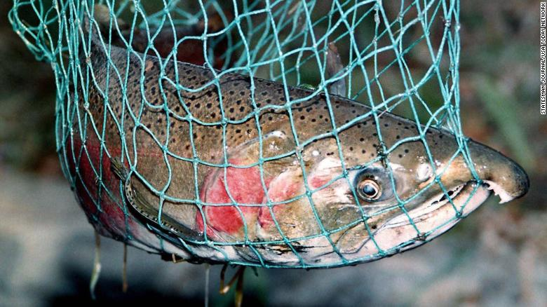 Coho salmon -- a species native to the US West Coast that have huge economic, cultural and ecological significance -- have been dying mysteriously for decades. Scientists now think they know why.