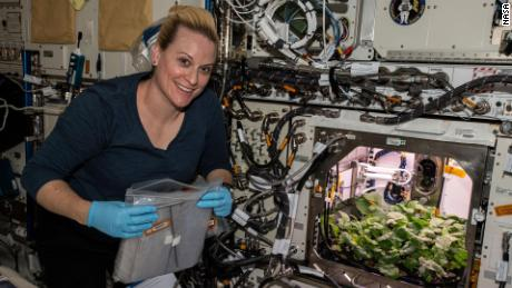 NASA astronaut and flight engineer Kate Rubins checks out radish plants growing on the space station as part of an experiment to evaluate nutrition and taste of the plants.