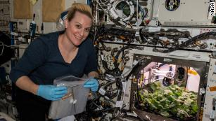 Astronauts harvest radishes grown aboard the International Space Station