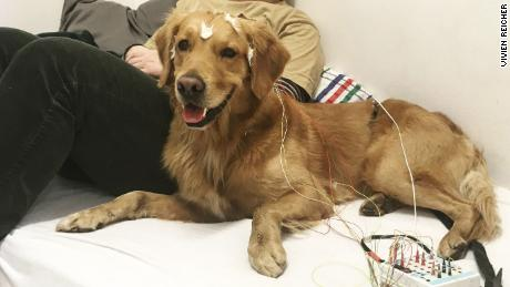 The family dogs had electrodes attached to their heads and were played a series of words while brain activity was measured.