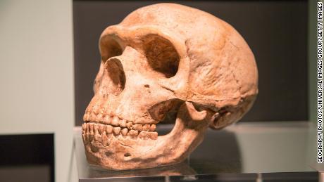 네안데르탈 인 DNA가 인간 건강에 미치는 영향-Covid-19의 위험 포함