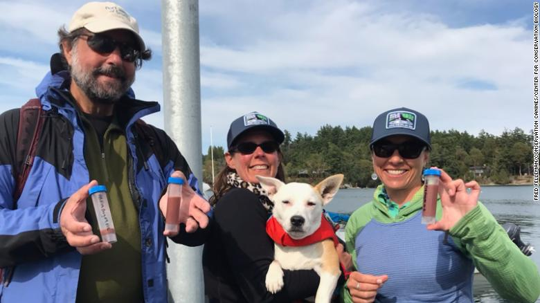 These feces-finding Fidos help save orcas and other endangered wildlife