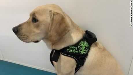 Shown here is one of the detection dogs that took part in the study.
