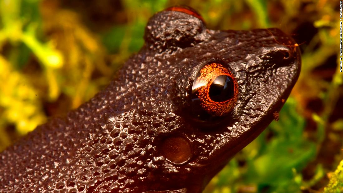 "As well as identifying new species, the Conservation International team rediscovered four species thought to be extinct, including the ""devil-eyed frog,"" which was last sighted 20 years ago, before a hydroelectric dam was built in its habitat. After numerous attempts to find the frog it was assumed the species no longer existed."