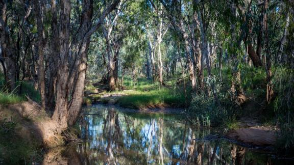 The beginning of the Carmichael River, which will be cut by the void of the Carmichael Coal mine.