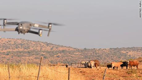 BeeFree Agro uses drones to herd cattle.