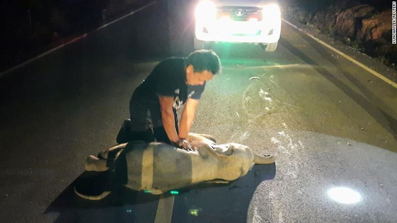A Thai rescue worker gave a baby elephant CPR after it was hit by a motorcycle. It survived
