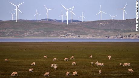 Des moutons paissent devant une éolienne sur le lac George le 1er septembre 2020, à la périphérie de Canberra, en Australie.