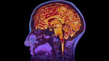 How to harness brain science for a better life, explained by a neuroscientist