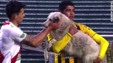 A player carries the dog off the pitch.