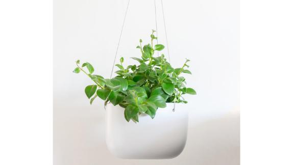 Peach & Pebble Indoor Hanging Planter