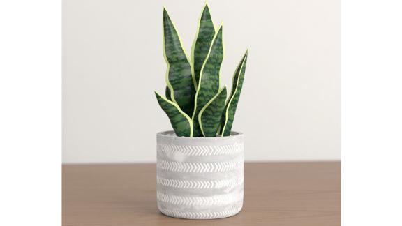 Foundstone 6.5-Inch Artificial Snake Plant in Pot