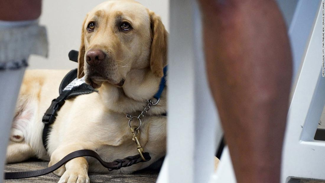 American Airlines changes rules for emotional support animals – CNN