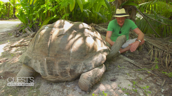 Seychelles Esmeralda oldest tortoise bird island africa pandemic spc_00032516.png