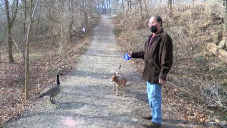 Lil' Bob the goose and family out on a walk