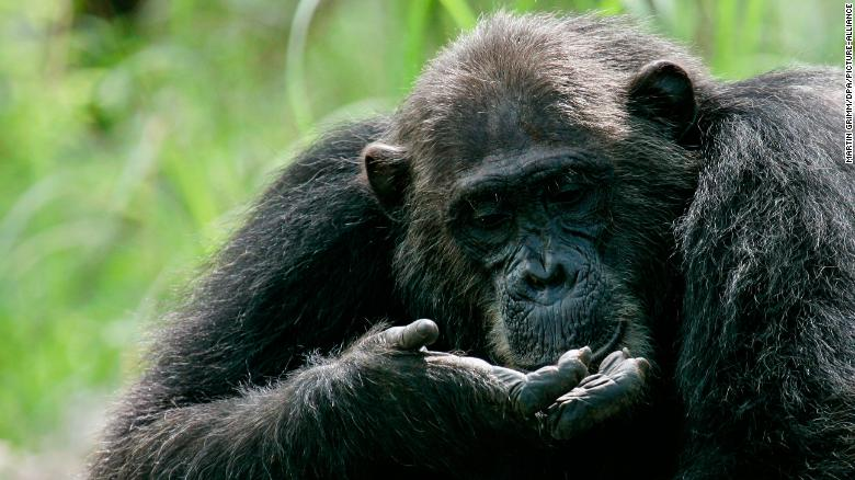 How animals transfer power from one leader to another: Brute force, inheritance and consensus